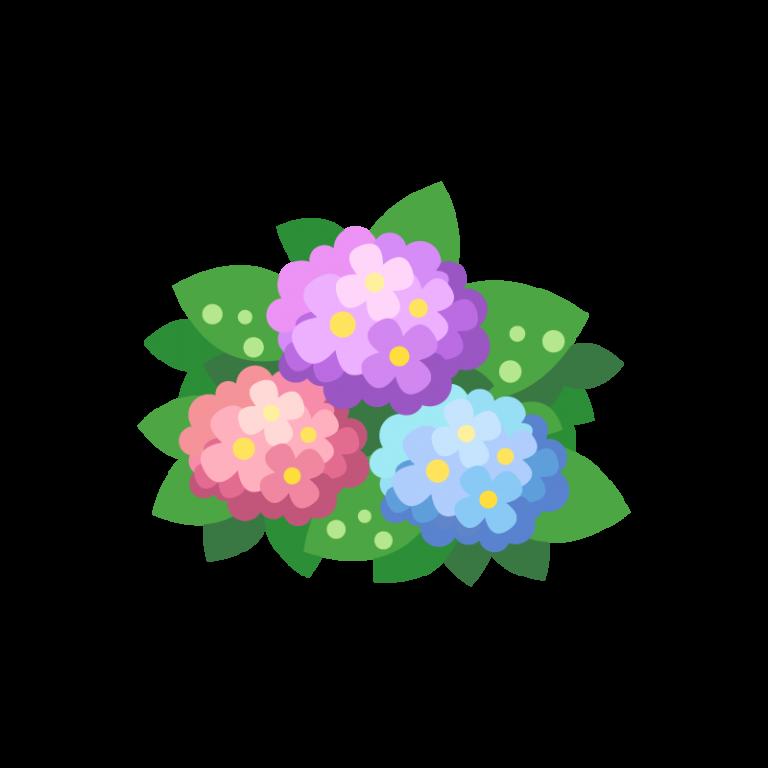 6月の初夏に咲く紫陽花(アジサイ/あじさい)のイラスト素材