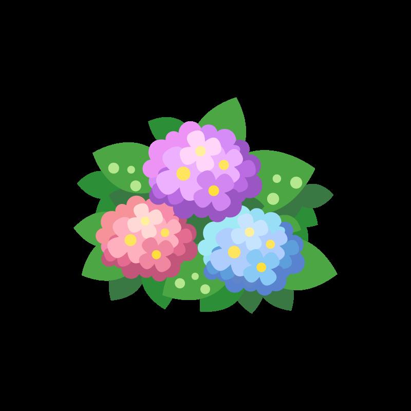 6月の初夏に咲く紫陽花アジサイあじさいのイラスト素材 商用可能