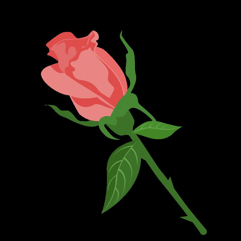 薔薇バラの花イラスト素材 商用可能な無料フリーのイラスト素材