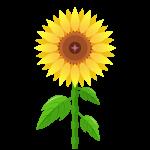 向日葵(ひまわり)のイラスト素材