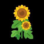 向日葵(ひまわり/ヒマワリ)のイラスト素材